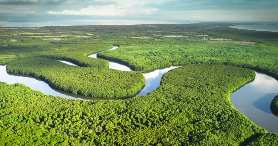 https-www-bakerenergylaw-com-wp-content-uploads-sites-35-2021-10-mangrove-forest-wetlands-streams-gettyimages-971549716_1200x630-jpg